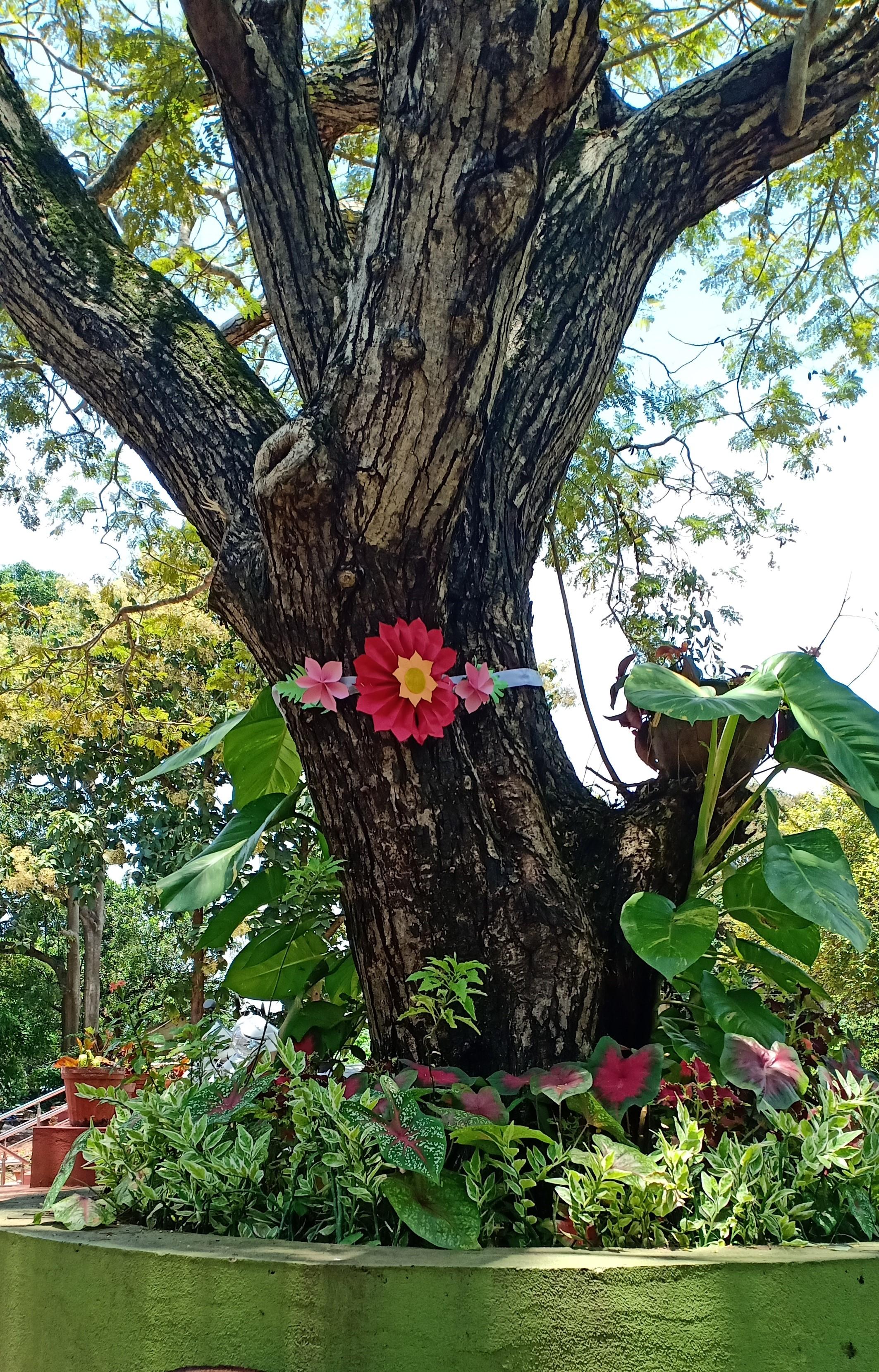 THE COPPER POD TREE